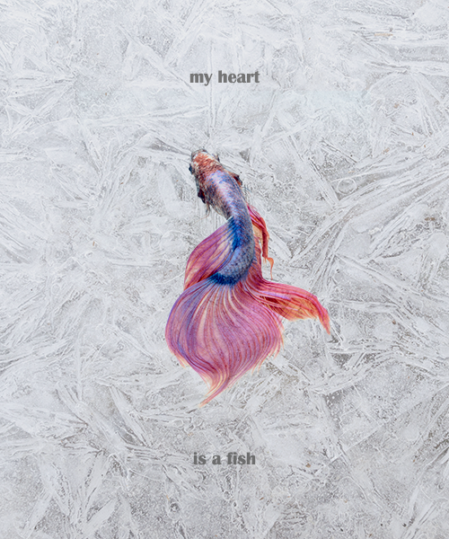 my heart is a fish