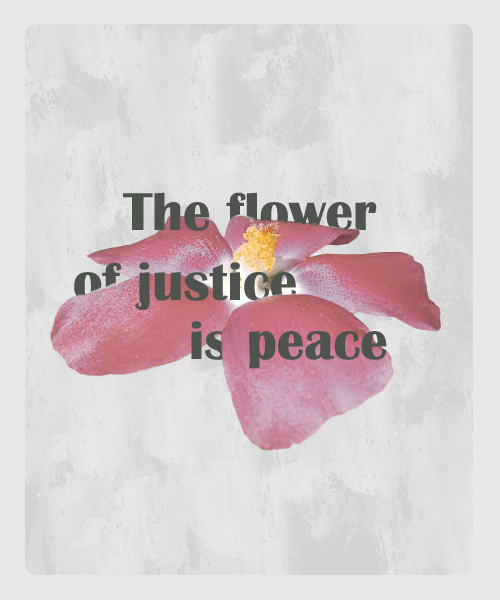 the flower of justice is peace